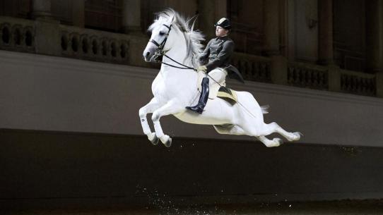 Bécsi Spanyol Lovasiskola - A Monarchia Keringő